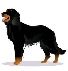 Scottish setter dog vector
