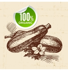 Hand drawn sketch vegetable zucchini eco food vector