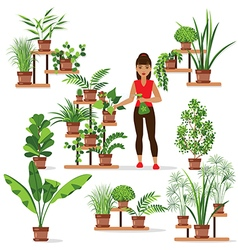 pot plants vector image vector image