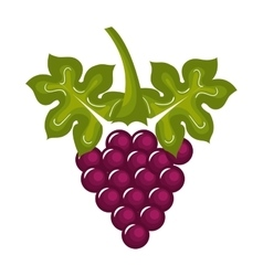 Grapes vine isolated icon design vector