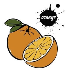 fruit ripe orange vector image