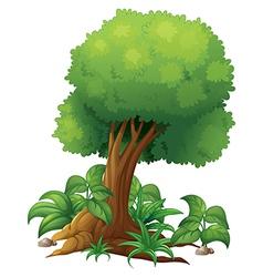 A big tree vector image vector image