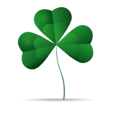 Green shamrock three leaf clover vector