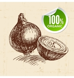 Hand drawn sketch vegetable onion eco food vector