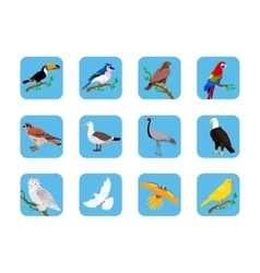 Collection of various birds flat design vector