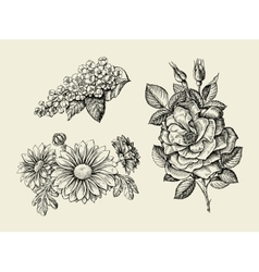 Flower hand drawn sketch dogrose rosehip wild vector