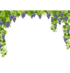 blue grape floral frame vector image
