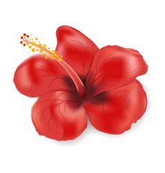Hibiscus flower in realistic style isolated on vector
