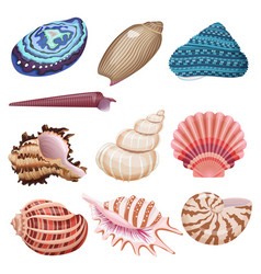 Seashells set vector
