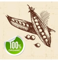 Hand drawn sketch vegetable peas Eco food vector image vector image