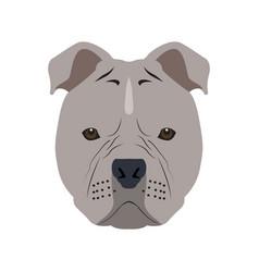 Isolated pitbull avatar vector