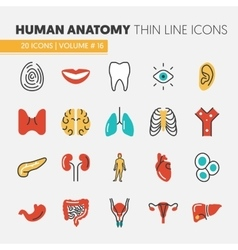 Anatomy thin line icons set with body parts vector