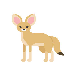 Desert fennec fox vector