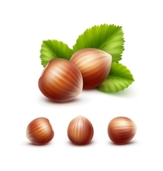 Set of full unpeeled hazelnuts with leaves vector