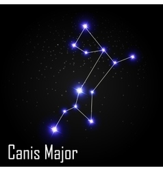 Canis Major Constellation with Beautiful Bright vector image