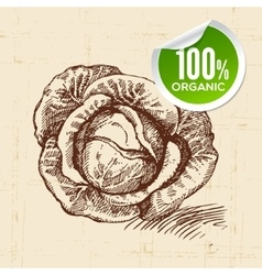 Hand drawn sketch vegetable cabbage eco food vector