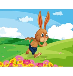 Rabbit in field vector