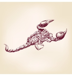 Scorpion hand drawn llustration realistic sketch vector
