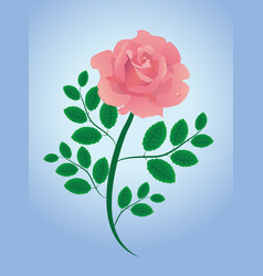 pink rose with leaves vector image vector image