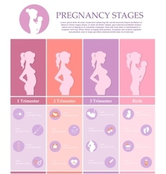 Pregnancy stages trimesters and birth vector