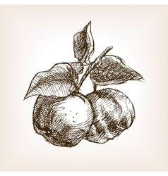 Quince hand drawn sketch style vector