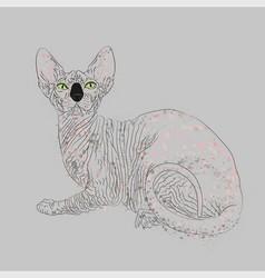 Sphynx cat entirely vector