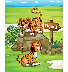Two tigers near the wooden arrowboard vector image
