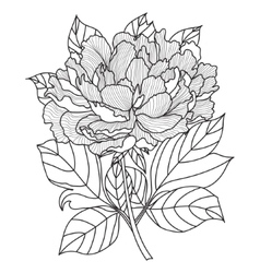 Peonycoloring book page for adults hand vector