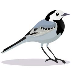 Wagtail bird vector