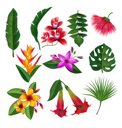 Tropical plants hawaii flowers leaves and branches vector