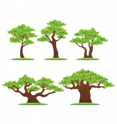 Oak trees vector