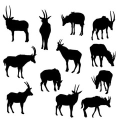 set of antelopes vector image