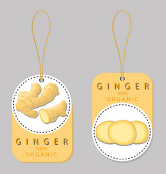 The ginger vector