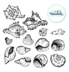 set of black sketch seashell vector image