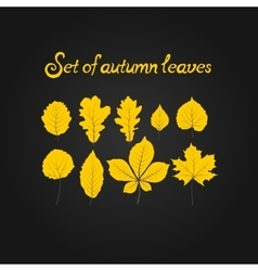 Hello autumn leaves vector