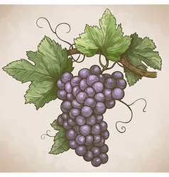 grapes on the branch retro style vector image vector image