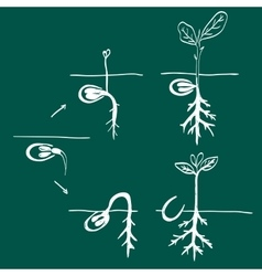 Growing seed doodle vector