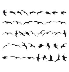 Seagulls vector