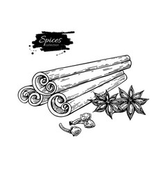 Cinnamon stick tied bunch anise star and cloves vector