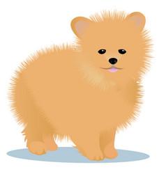 Spitz dog vector