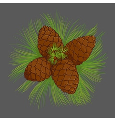 Cedar cones with pine needles vector