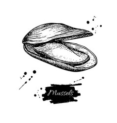 mussel hand drawn engraved vector image