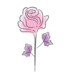 rose graphic vector image