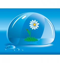 chamomile in a drop of water vector image vector image