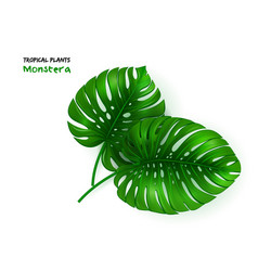 Isolated realistic tropical vector