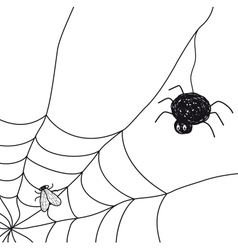 Spider with a fly in a web on white background vector image vector image