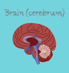 Human organ icon in flat style brain vector