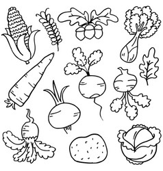 Doodle of vegetable on white background vector