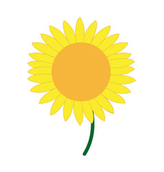 cute flower sunflower decoration nature vector image