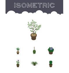 Isometric houseplant set of blossom peyote vector